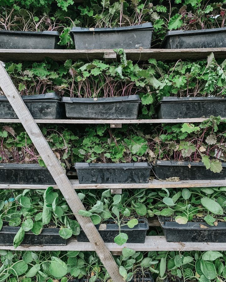 a rack of organic vegetables growing at a vegetable farm